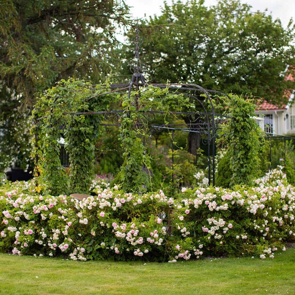 Blomsterik hage med hvite blomster